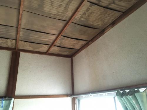和室天井のシミ直します。
