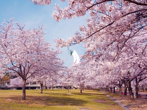 春の桜エキスで美白&リラクゼーション効果大!!絶賛好評!