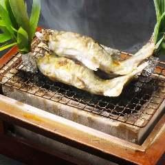 """本日のお勧め!和歌山産""""若鮎入荷""""鮎の塩焼きはいかかですか。"""