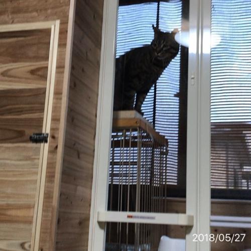 我が家の猫ハウス完成