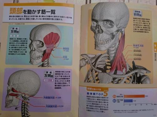 曲げると痛い 膝の痛み 原因は首にある?