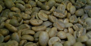 コーヒーの生豆成分の構成