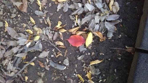 雨と秋の訪れ