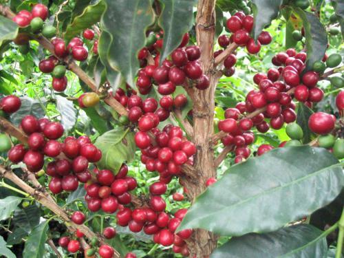 機構の宝庫で栽培されるバラエティ豊かな味わい『コロンビア』