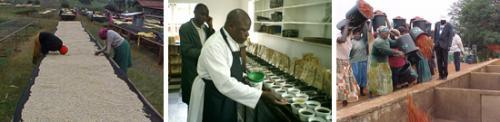 ケニアのコーヒー