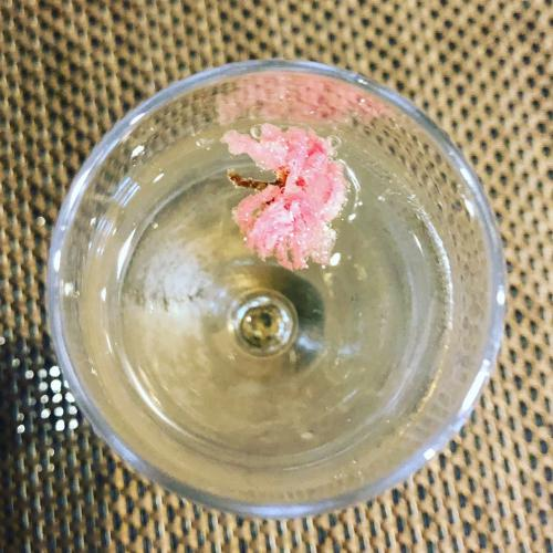 桜咲くスパークリングワイン