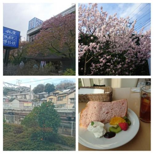 春の小田原