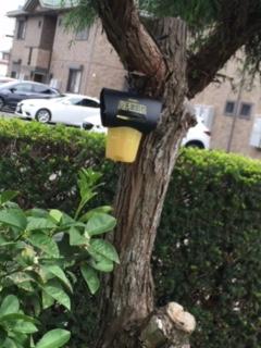 つくば市蜂の巣駆除