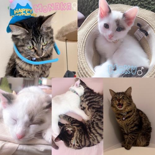 愛猫ちゃんたち