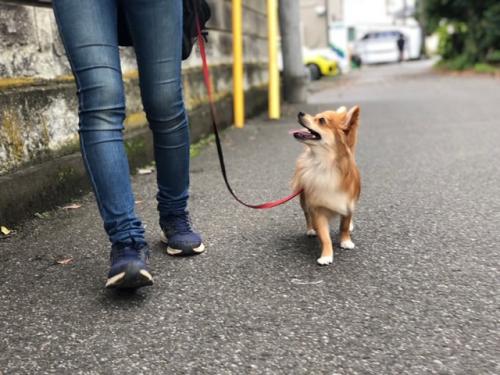 園長が描く日本の犬未来