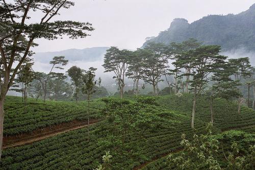 紅茶の聖地インド、輝ける島スリランカ