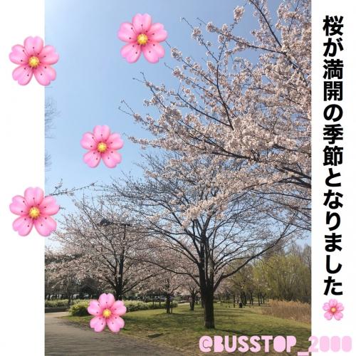 桜が満開の季節となりました。