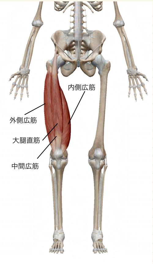 肩こり腰痛免疫力向上ストレッチはオリンピア鍼灸整骨院