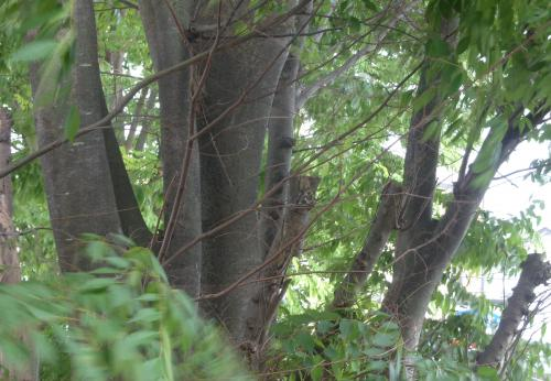 【植木の伐採や剪定はお任せください】 伐採 剪定 さいたま市