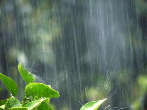 雨で畳が濡れたときは
