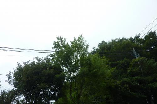 【伸びすぎた木々の伐採いたします】 剪定 草刈 業者 埼玉