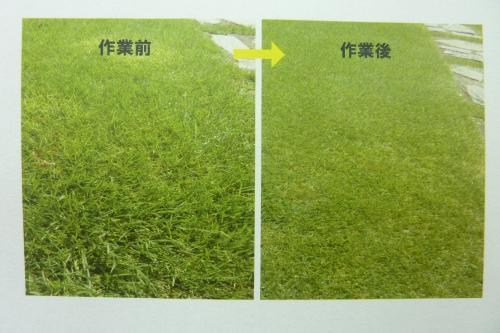 【芝刈り】お庭の芝生をお手入れします|代行|埼玉|便利屋