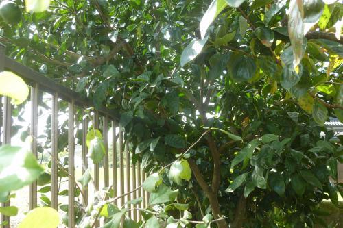 【植木の剪定・伐採でトラブル回避】|樹木|植木|緑区