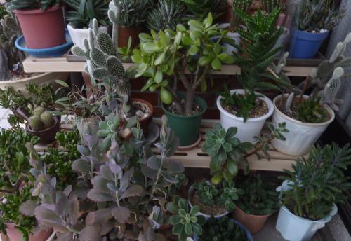 寒くなる季節の前に!鉢植えの移動いたします|植木鉢|北区