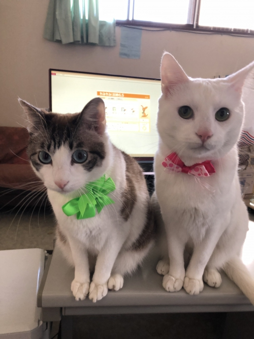 里山葬祭の看板猫
