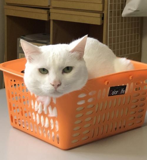 秦野葬祭ホールの看板猫さん今日は寒いようです