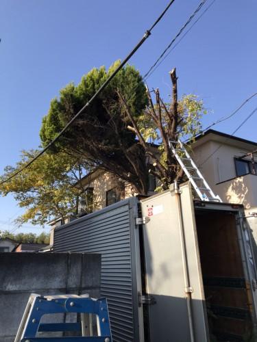 埼玉県にて木の伐採・回収処分サポート