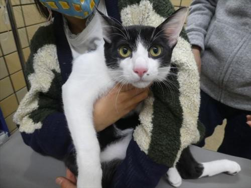 12/25ワクチン 和猫 動物病院 名古屋市緑区天白区豊明市