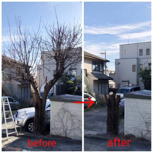 東京都 木の伐採 伐採作業