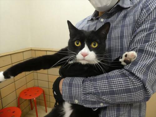 2/20ワクチン 和猫、トイプー、秋田 動物病院 名古屋市