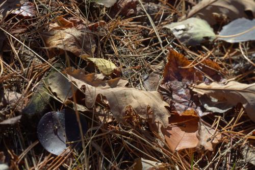 庭をお掃除して火災・防災対策 剪定 落ち葉清掃 さいたま市