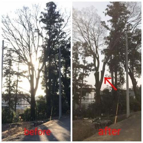 埼玉県にて木の伐採作業実行!