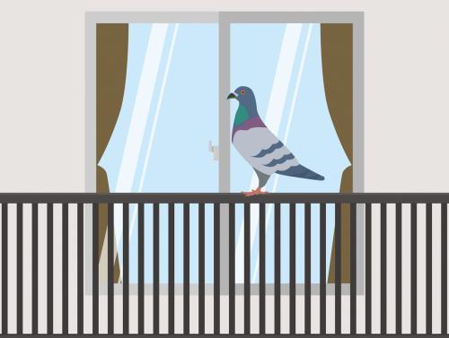 ベランダの鳩フン放置は危険!見つけたら早期清掃で対策|大宮区