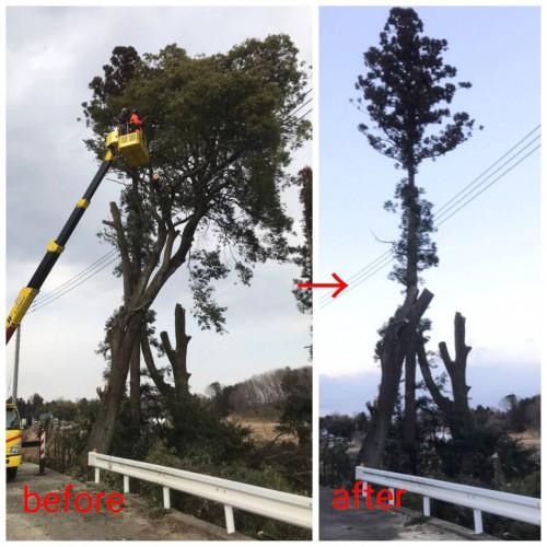 埼玉県 木の伐採作業 高所作業
