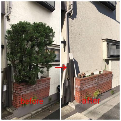 世田谷区にて木の伐採作業実行です!