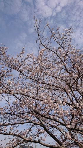 あっというまに桜の季節も終わり!久しぶりのクルクルパーマ!
