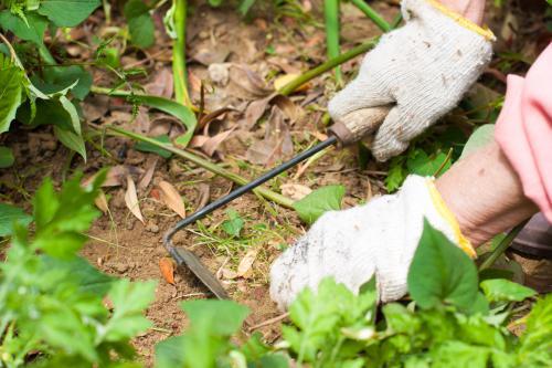 【埼玉】お庭の草刈り・剪定の定期作業がオススメです