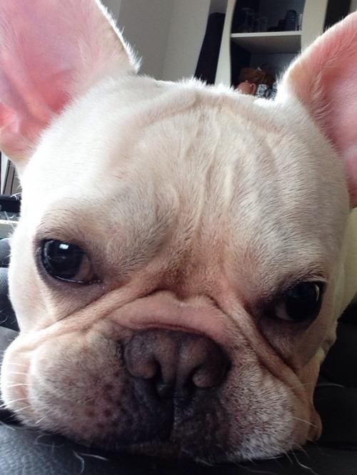 愛犬のルーニー君です!!