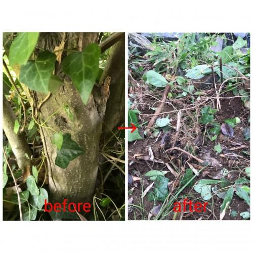 千葉県にて木の剪定・抜根・回収サポート