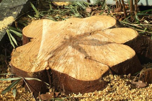 【庭木の伐採】植木1本から承ります! さいたま市