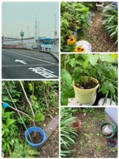 植木の移設と植栽作業も八王子市便利屋サンライフ