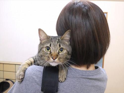 7/17ワクチン 和猫 動物病院 名古屋市緑区天白区豊明市