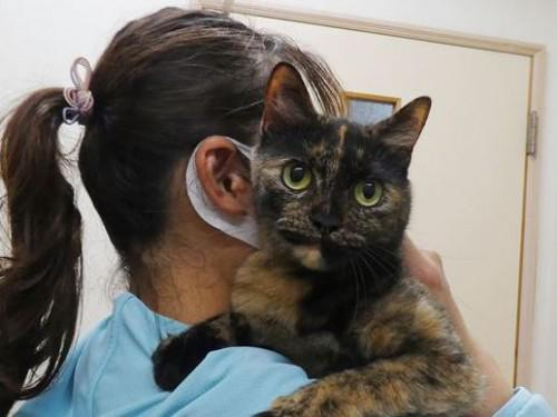 9/28ワクチン 和猫、ダックス 動物病院 名古屋市緑区