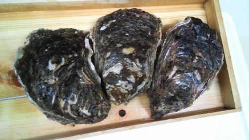 八王子では、玉がきだけ!?。夏が旬の岩牡蠣!日本酒のお供に!