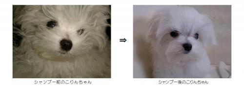 シャンプーしよう((o(^∇^)o))